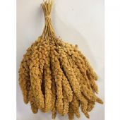 CHINESE YELLOW MILLET SPRAYS - WHITE 900g (Approx 30 SPRAYS) - GOOD QUALITY - BIRDS